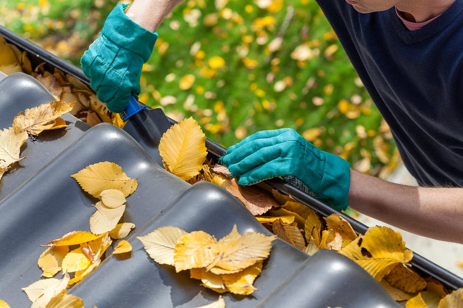 South Shore Window Cleaning - Gutter Cleaning Service